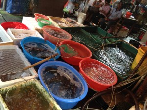 Fish kept in containers for sale. Some with insufficient water.