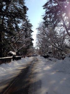 A little piece of Winter Wonderland