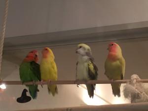 Kotori Bird Cafe