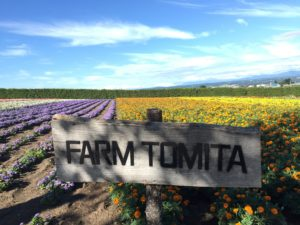 Furano, Hokkaido: Farm Tomita is full of lavender during the summer